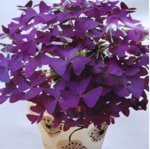 Die wichtigsten Vorteile von einem Blumenstrauß Testsieger in der Übersicht